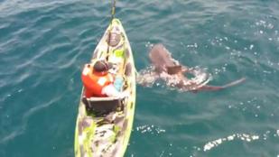 Cápa rántotta vízbe a horgászt