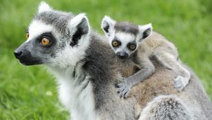 Istentelenül aranyos állatgyerekek lepték el Nyíregyházát