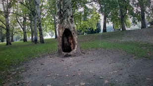 Ezt a petíciót kell aláírnia, ha egy kicsit is a szíven viseli a városligeti fák sorsát