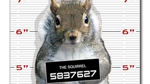 Látott már rabosított mókust? Tessék, itt van egy!