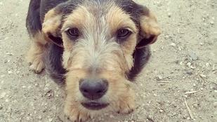Tappancs, a kutya kedden eltűnt Balatonedericsről