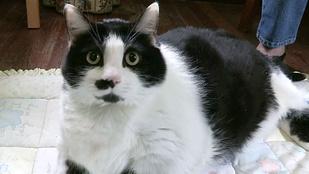 Ha mindig is díszes macskasegglyukat akart látni, itt a lehetőség