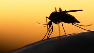 A balatoni szúnyogoknak annyi