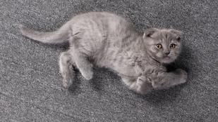 Hasborotválással zaklatják szerencsétlen kanadai macskákat