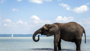Elefántokkal fürödhet hétvégén. Igen, jól olvasta!
