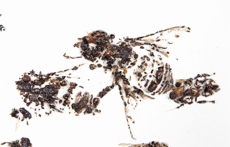 Bees of Bees 2, 2012