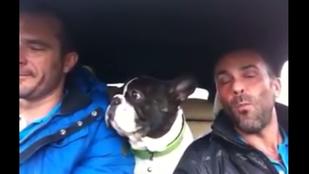 Ez az éneklő kutya nyerte meg az életet