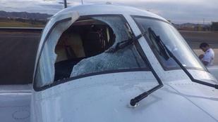 Benézett egy keselyű a repülő szélvédőjén