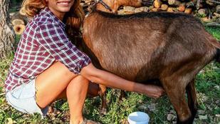 Látta már Horváth Évát kecskét fejni?