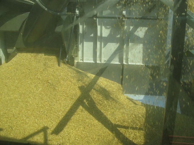 11 köbméteres a magtartály, gabonából körülbelül hat és fél tonna fér bele, hangjelzés figyelmeztet, ha kezd megtelni