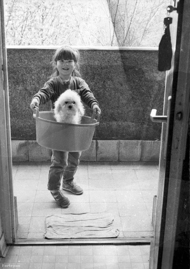Akinek kutyája és kisgyereke is van, bizonyára rájött arra, amit a híres magyar etológus, Csányi Vilmos hosszú és alapos kutatómunka után publikált: a kutyák szőrös kisgyerekek. Egy nem beszélő, másfél-kétéves gyerek értelmi színvonalán állnak, azaz mindent megértenek, de nem tudnak rá szóban felelni, ezért úgy fejezik ki magukat, ahogy tudják, mutogatással, utánzással. Sok családban azonban a gyerekszületés egyúttal a kutyatartás végét is jelenti – pedig a fenti, '80-as évekbeli fotó is gyönyörűen illusztrálja, hogy egy jól nevelt, kistestű bolognese akár a gyerek legjobb barátja lehet, hiszen bármikor szívesen labdázik és kergetőzik vele, akkor is, amikor a felnőttek épp nem érnek rá játszani.