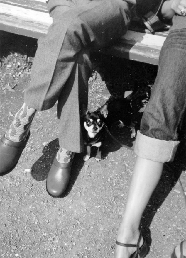 Az élére vasalt nadrághoz felvett, hülyemintás zoknit és férfiklumpát elnézve bizonyára nem nehéz kitalálni, hogy ez a fotó 1982-ben készült. Ekkoriban a gombamód szaporodó lakótelepek panelházaiban is egyre gyakoribbak lettek a kistestű kutyák, akiknek a mozgásigényét bőven elég volt levezetni a gömbmászókás-vasrakétás játszótéren (és közben a banda elszívhatott egy-két cigit is, ha anyu épp nem az erkélyen vagy konyhaablakban nézelődött). Manapság persze a játszóterekre már nem mehetnek be kutyák, ebből is látszik, hogy régen minden jobb volt.