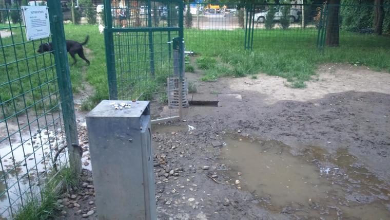 Kutyafuttató a Markusovszky téren
