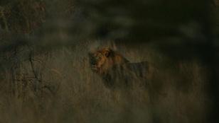 Jericho az oroszlán se nem halott, se nem Cecil testvére
