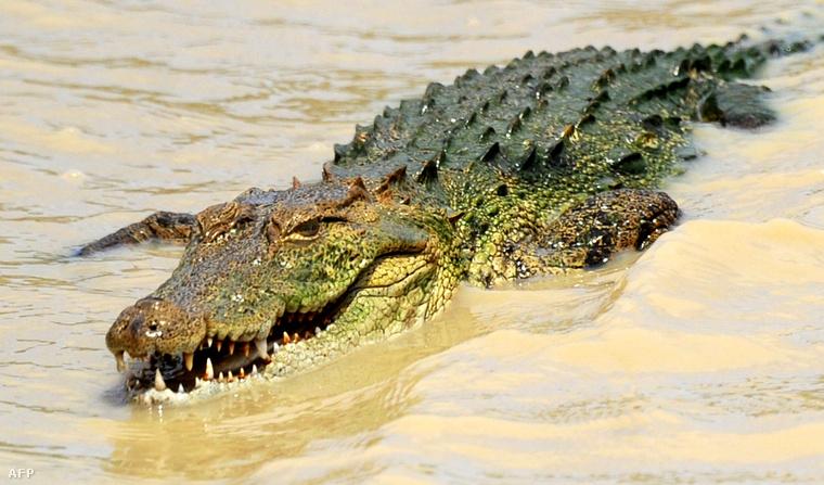 Ez a krokodil nem az a krokodil