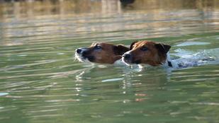 Mégis vannak szuper kutyabarát nyaralóhelyek a Balatonon