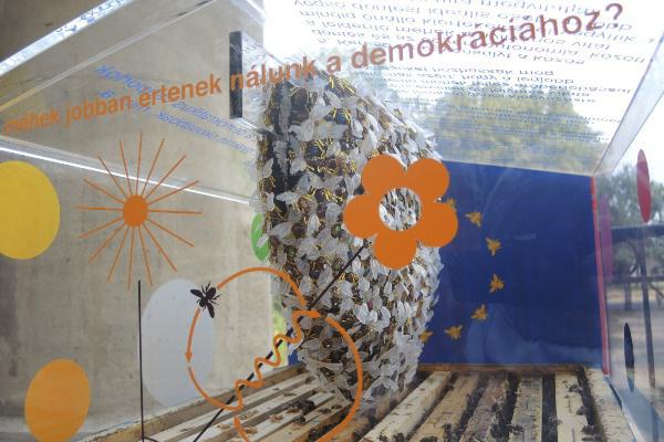 Az Új Múzeum Méheknek egyik kiállítótere a méhekkel