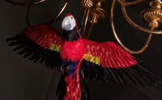 Haydn papagája
