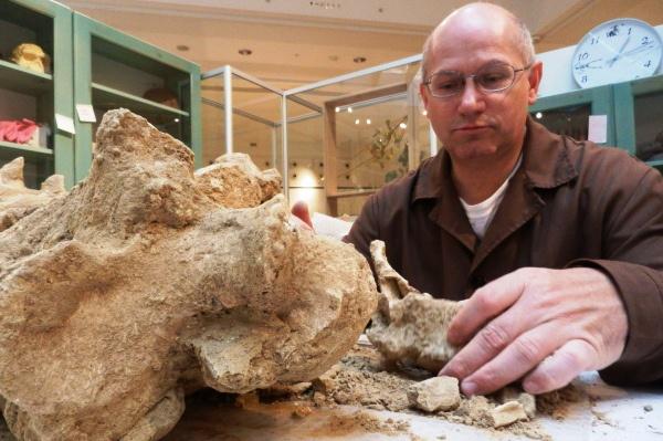 Magyar Természettudományi Múzeum: Leltárba véve: 9 643 086 példány - élő nemzeti természetrajzi gyűjtemény