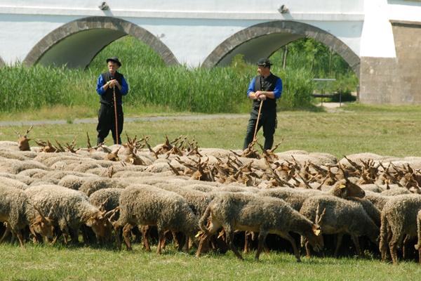 A pásztorok világa