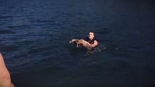 Szupercuki őzgidát mentettek ki a tóból, és ezt le is videózták