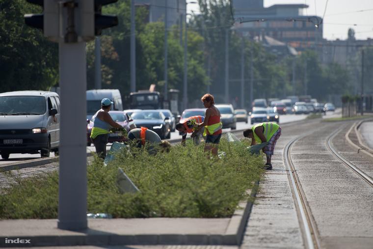Hónapokig nem vágták le a füvet és nem is gyomláltak a 1-es vonalon. Miután Vitézy Dávid kiakadt, máris elkezdődtek a munkálatok.