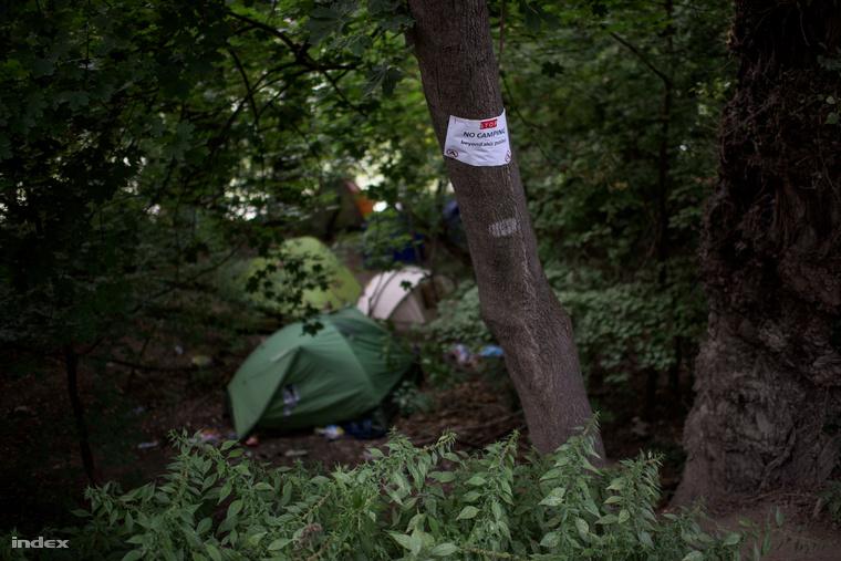 Tiltott ártéri területen sátrazók a Szigeten.
