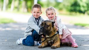 Csak akkor féljen ezektől a kutyáktól, ha valami rosszban sántikál