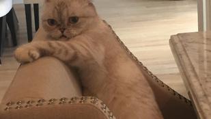 Taylor Swift és Lisa Kudrow élőben adta elő a Büdös macska című klasszikust