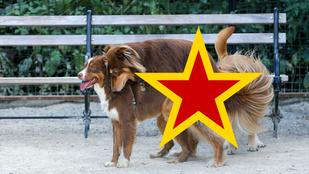 Amanda Seyfried kutyája durva gruppenszexbe keveredett