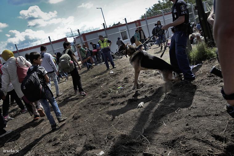 Kutyás rendőrök a röszkei menekülttábor bejáratánál