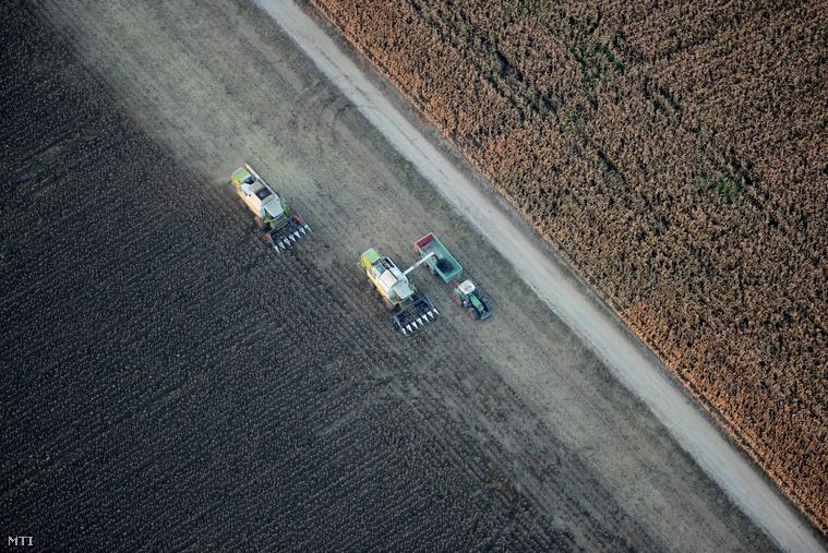 Napraforgó-aratás  a Tolna megyei Zomba határában