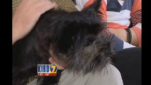 Feketére festette a lopott kutyát az ebtolvaj, de lebukott