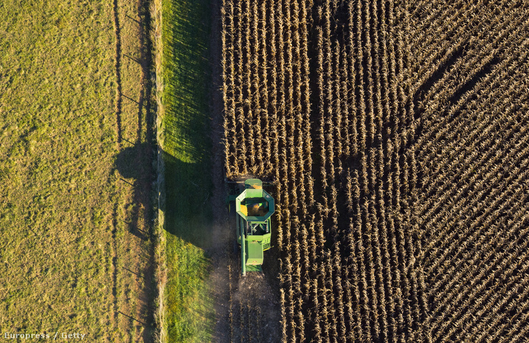 Kukoricaföld Marylandben