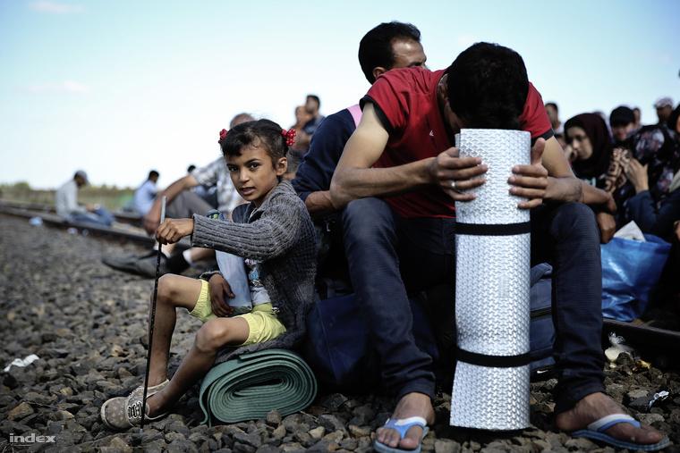 Menekültek Röszke határában szeptember 9-én