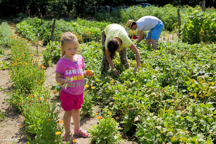Helyben termelt zöldséggel a fenntartható fejlődésért