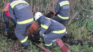 Ezt a lovat tűzoltók mentették meg